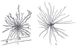 [Изображение: 250px-Neuroglia.png]